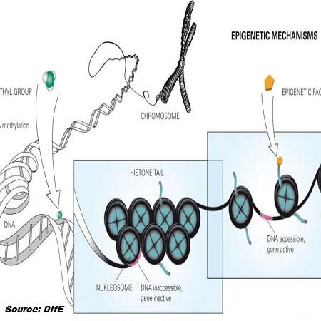 epigeneticch-resized-1